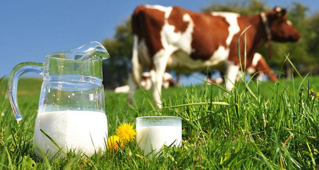 Sữa bò gây nổi mề đay, dị ứng da ở trẻ nhỏ
