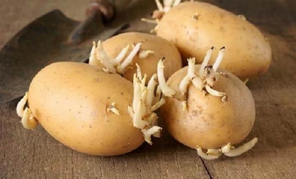 hết bệnh mụn cóc bằng khoai tây